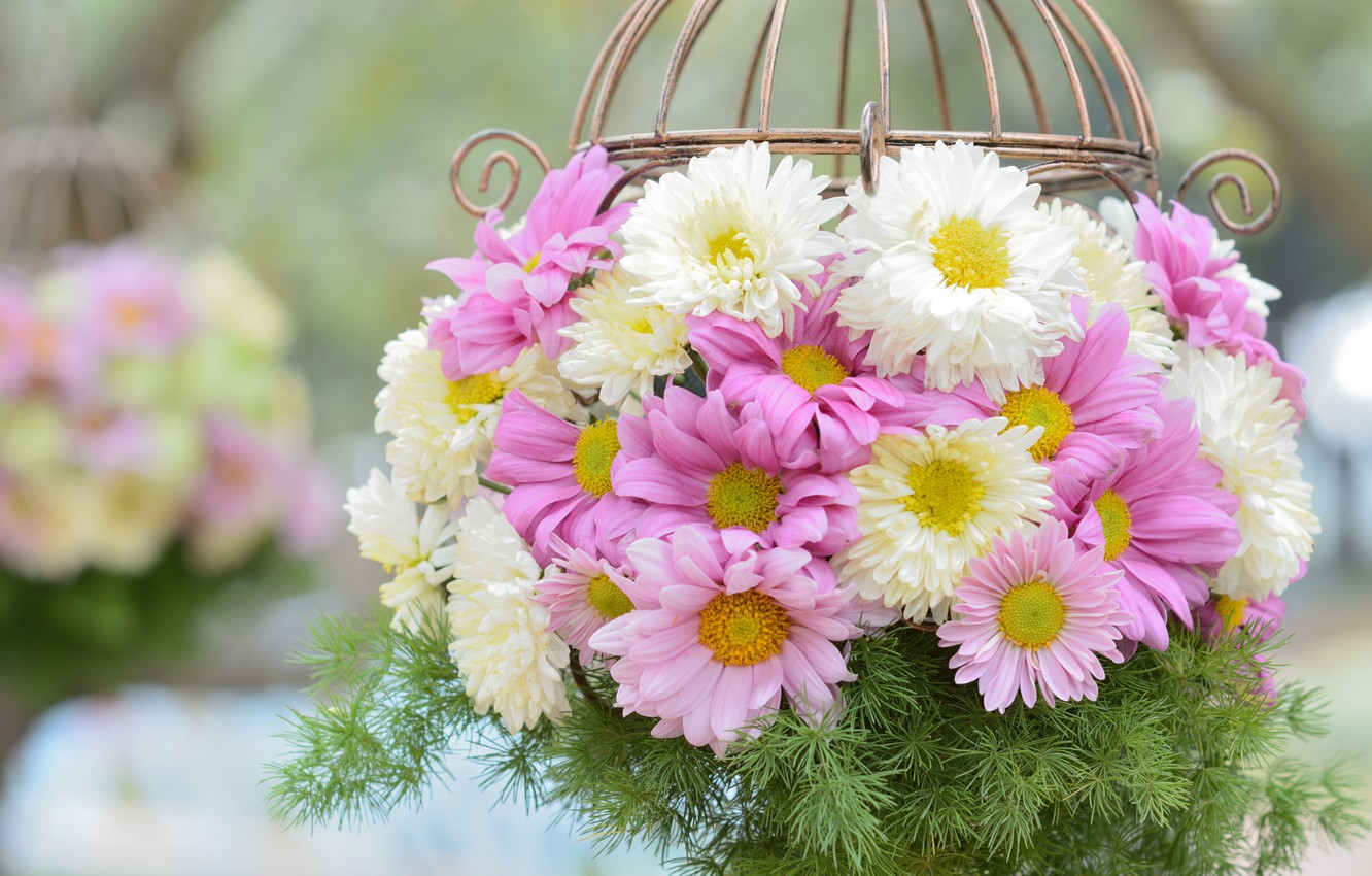 Photo wallpaper basket, chrysanthemum, composition