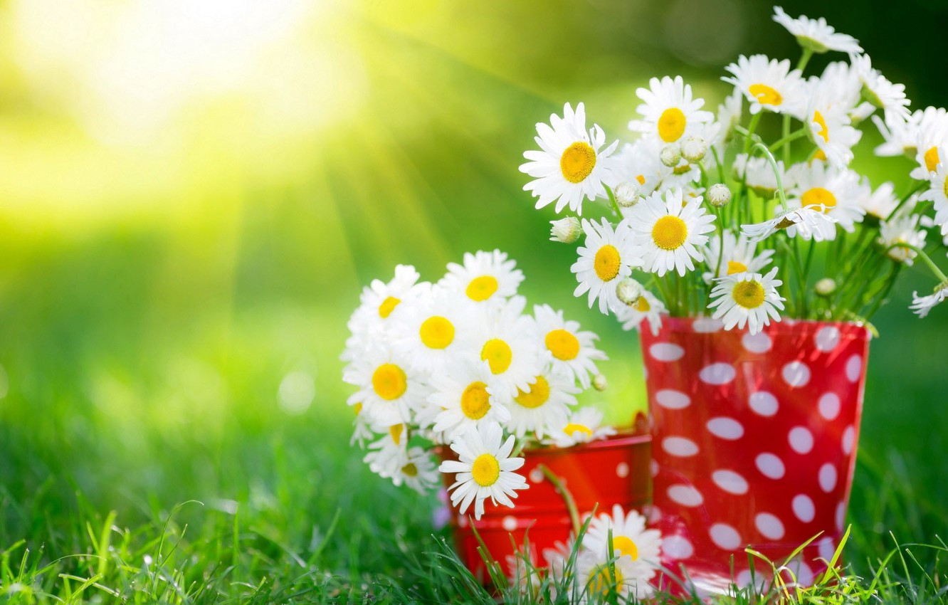Photo wallpaper summer, grass, rays, chamomile, bouquets, cups, sunlight