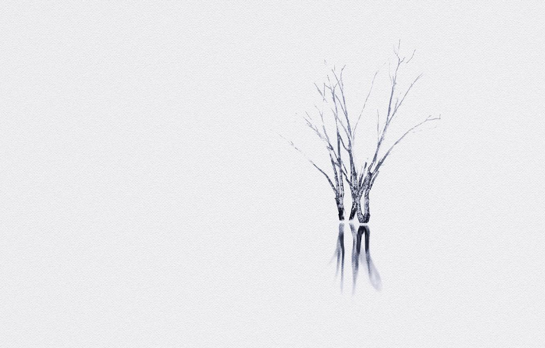 Photo wallpaper nature, background, tree