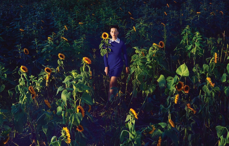 Photo wallpaper field, the sun, sunflowers, dress, Katy Perry