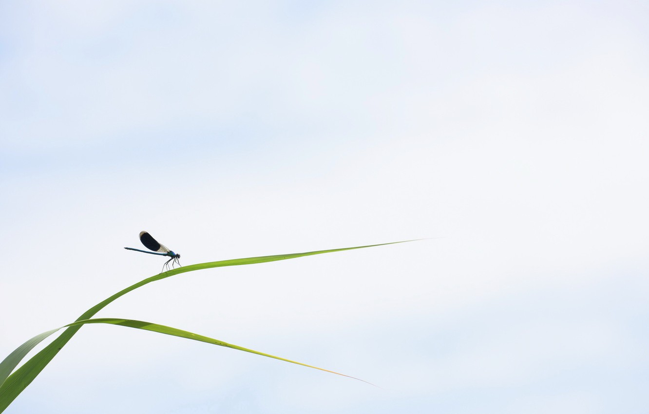 Photo wallpaper grass, nature, insect