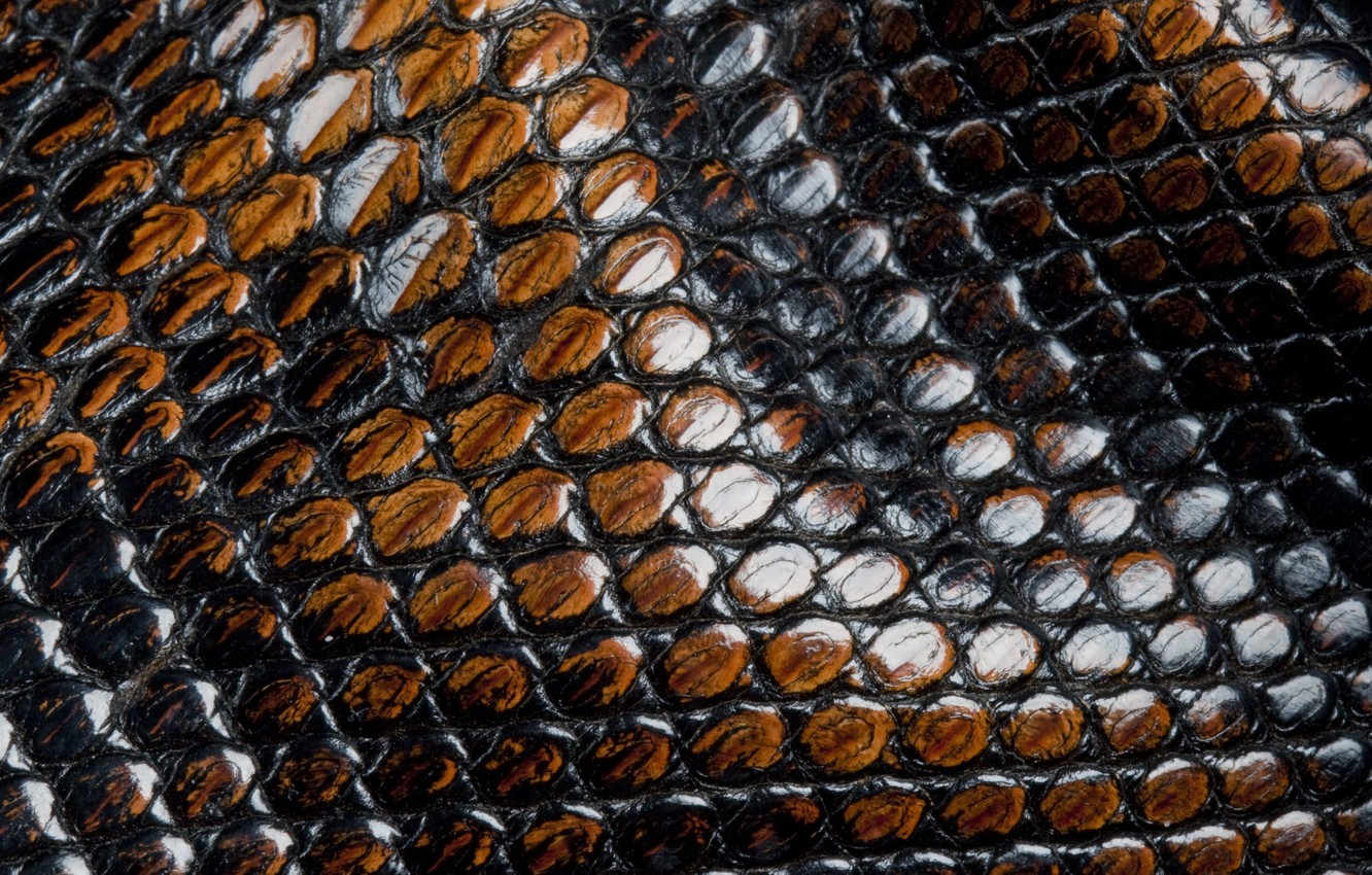 Photo wallpaper snakes, scales, leather, animal texture
