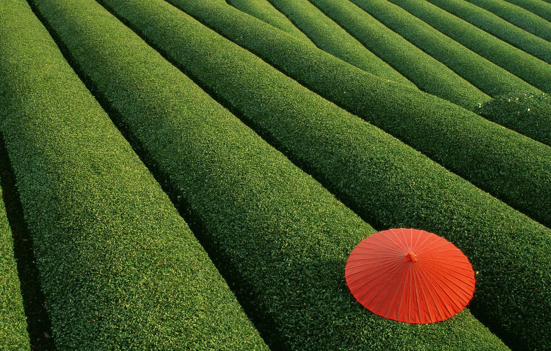 Photo wallpaper Leaves, The bushes, Umbrella