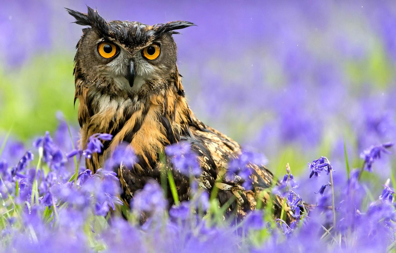 Photo wallpaper flowers, rain, owl, bird, spring, Owl