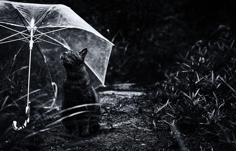 Photo wallpaper cat, umbrella, Koshak, Tomcat