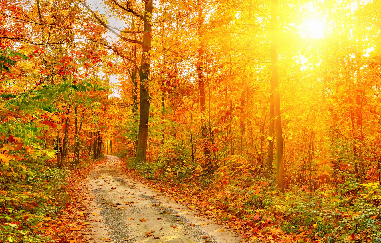 Photo wallpaper rays, light, Nature, Autumn, Trees, Leaves, Road, Forest