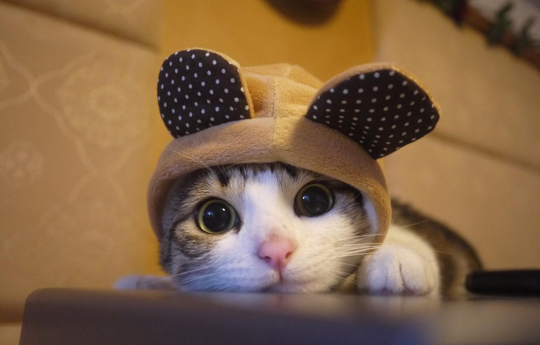 Wallpaper kitten, cat, cute images for