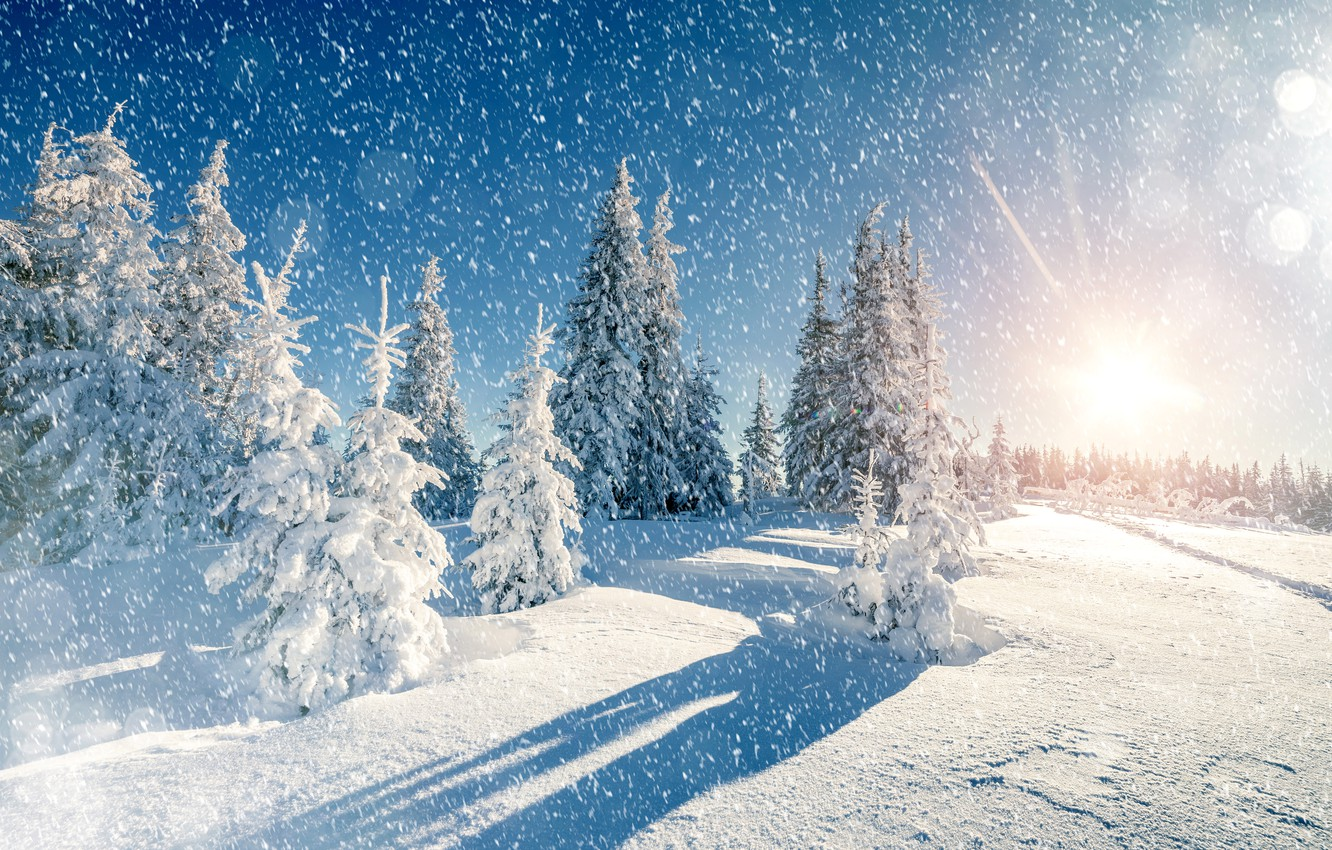 Photo wallpaper Nature, Winter, Trees, Snow, Spruce, Snowflakes