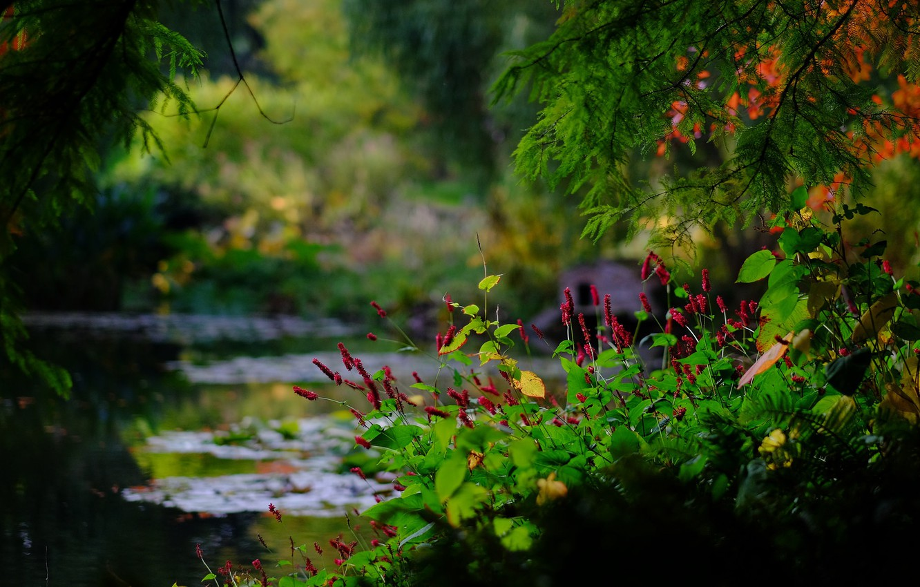 Photo wallpaper branches, pond, Park, England, bokeh, England, Hampshire, Hampshire, Romsey, Sir Harold Hillier Gardens, Romsey