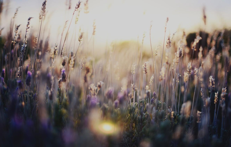 Photo wallpaper grass, flowers, nature, flowers, nature, flowers