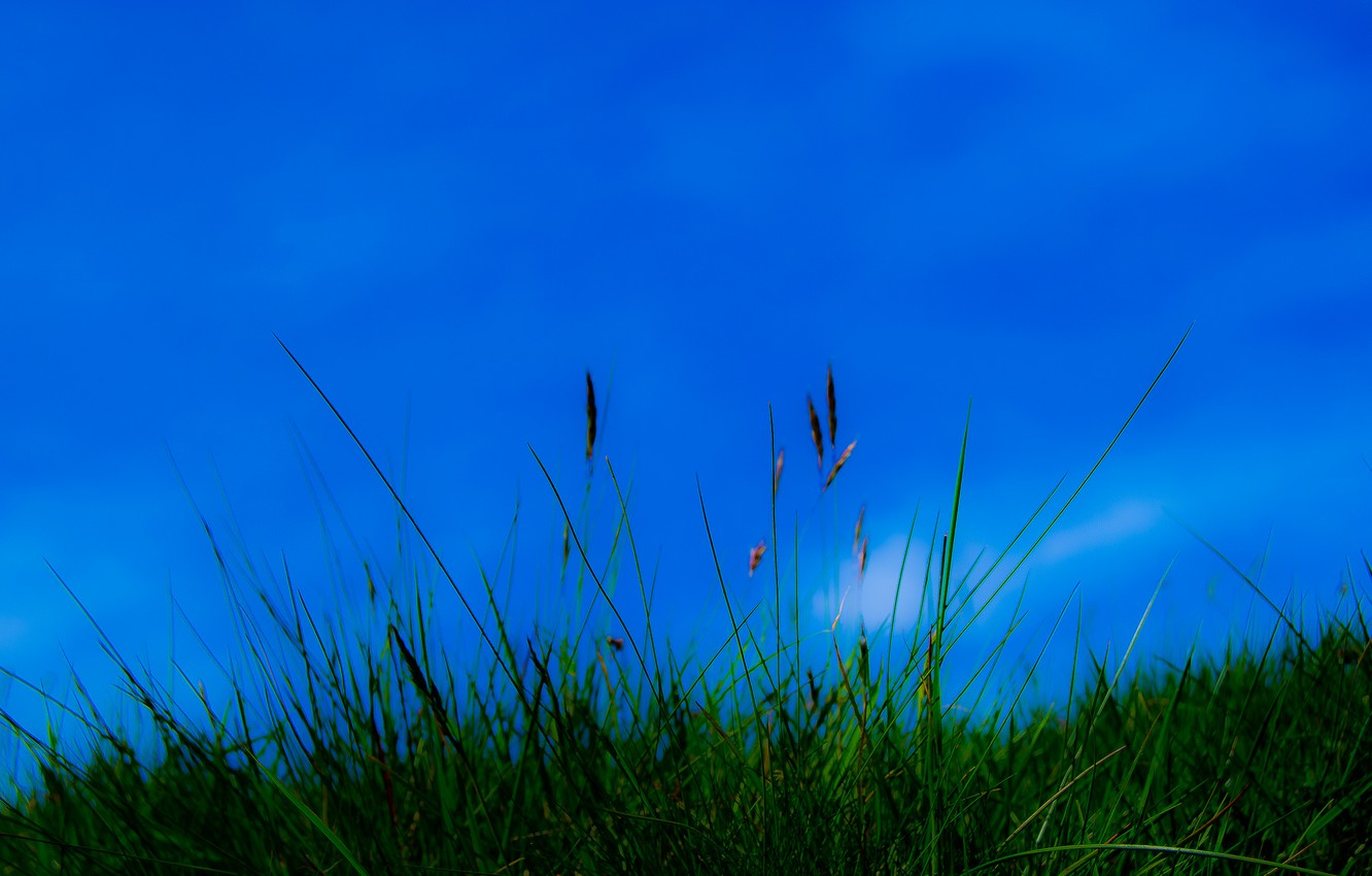 Photo wallpaper the sky, grass, nature, plant