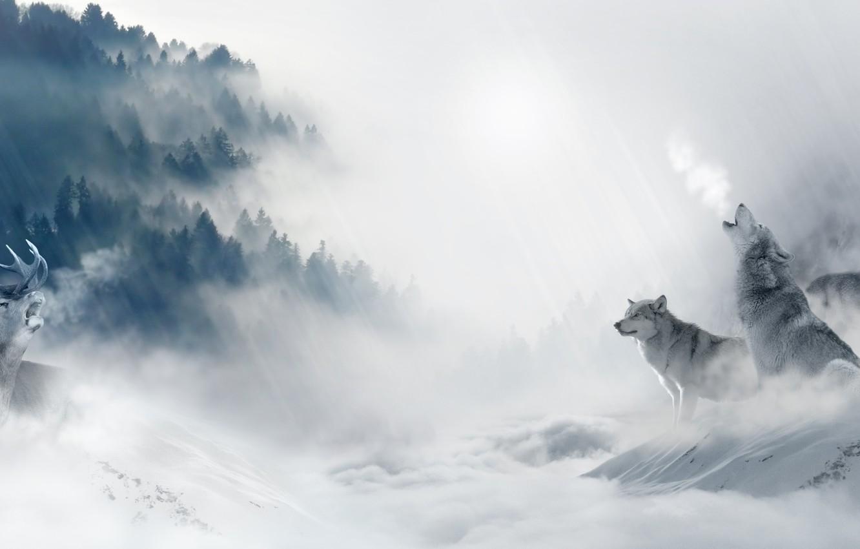 Photo wallpaper cold, winter, forest, snow, trees, fog, predators, pack, deer, art, wolves, hunting, mining