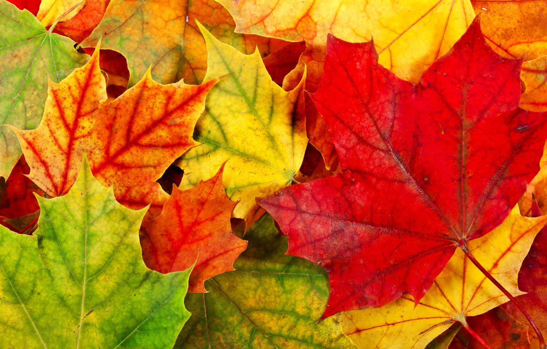 Photo wallpaper autumn, leaves, foliage, yellow, green, red, orange, fallen