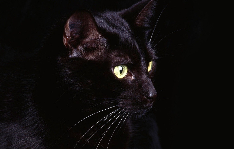 Photo wallpaper eyes, cat, mustache, black, Black, eyes, cat, whiskers