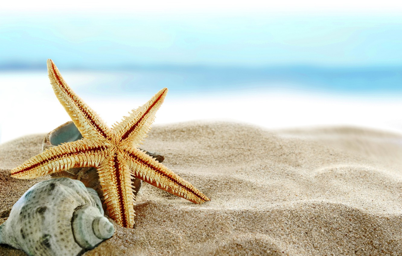 Photo wallpaper sand, sea, beach, shore, shell, summer, beach, sea, blue, sand, shore, paradise, starfish, seashells