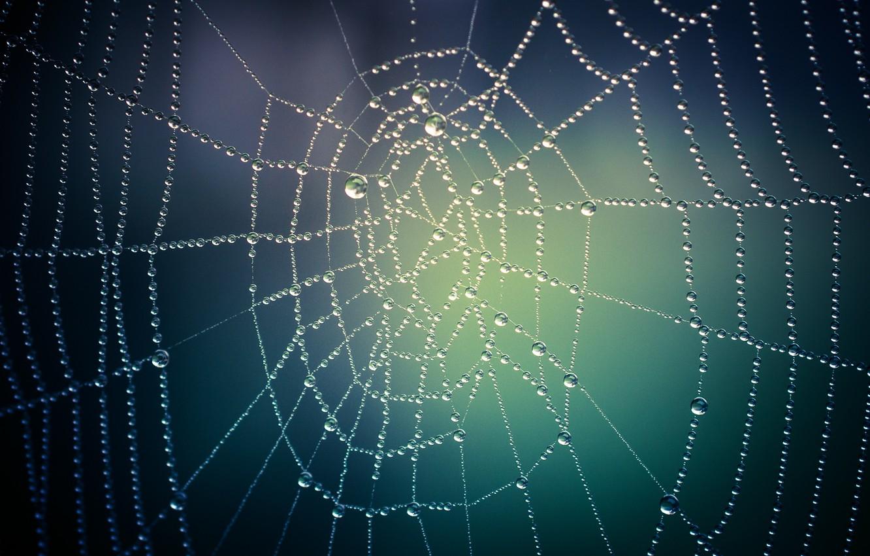 Photo wallpaper drops, macro, web, drops, Macro