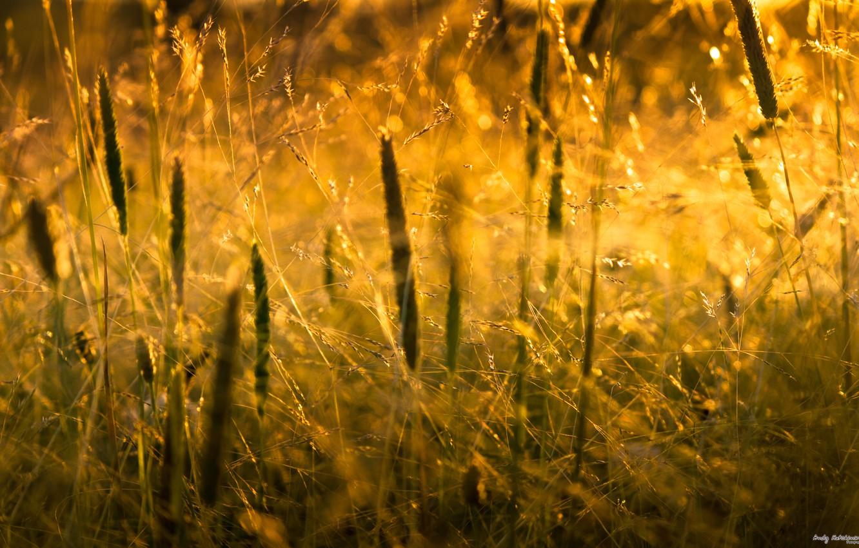 Photo wallpaper grass, the sun, macro, light, nature, grass, nature, macro, 2560x1600, sunlight