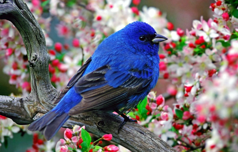 Photo wallpaper flowers, feathers, Bird