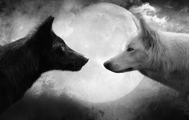Photo wallpaper white, the moon, black, wolf