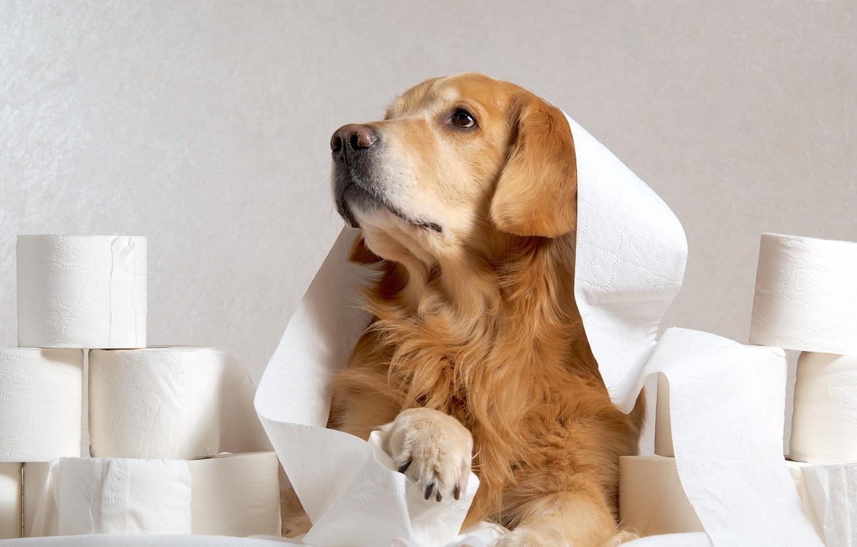 Photo wallpaper look, paper, each, dog