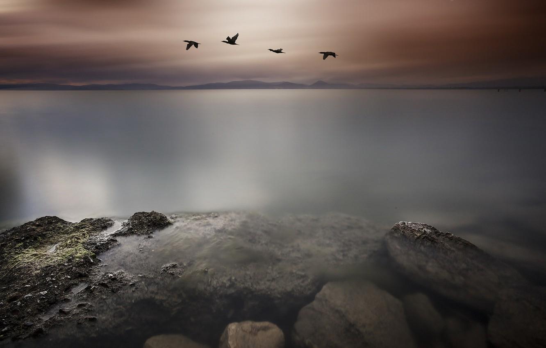 Photo wallpaper sea, landscape, birds, night