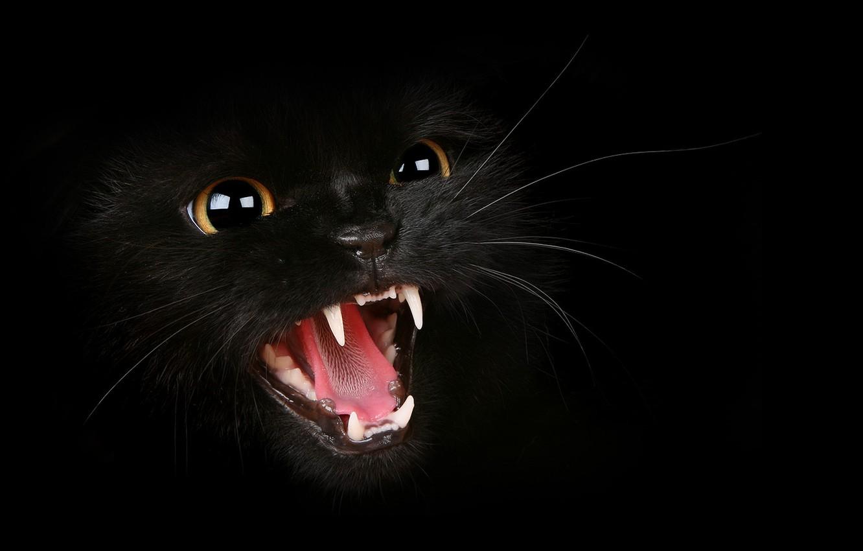 Photo wallpaper cat, mustache, fangs, grin, evil, Tomcat, hisses, evil mustachioed animal