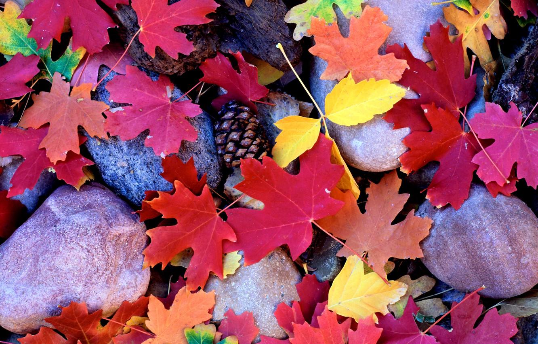 Photo wallpaper autumn, leaves, Stones, maple, bumps