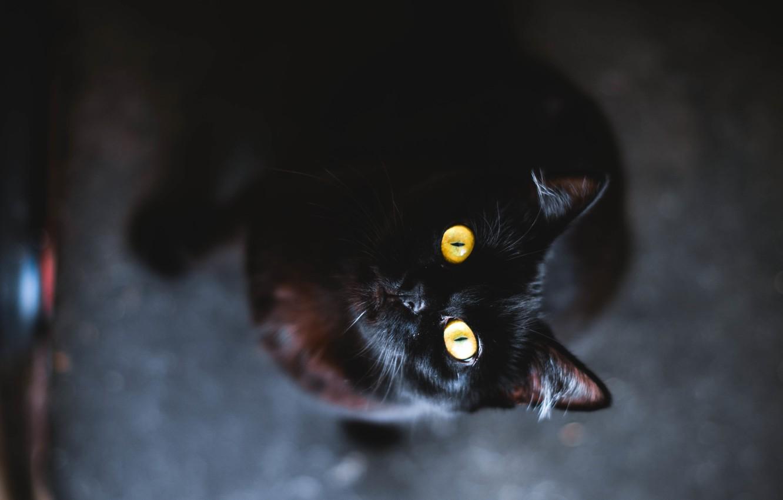 Photo wallpaper eyes, cat, animal, black, yellow, wool