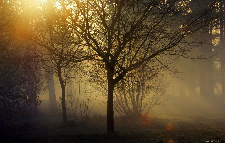 Photo wallpaper rays, trees, fog, twilight, George Kirk