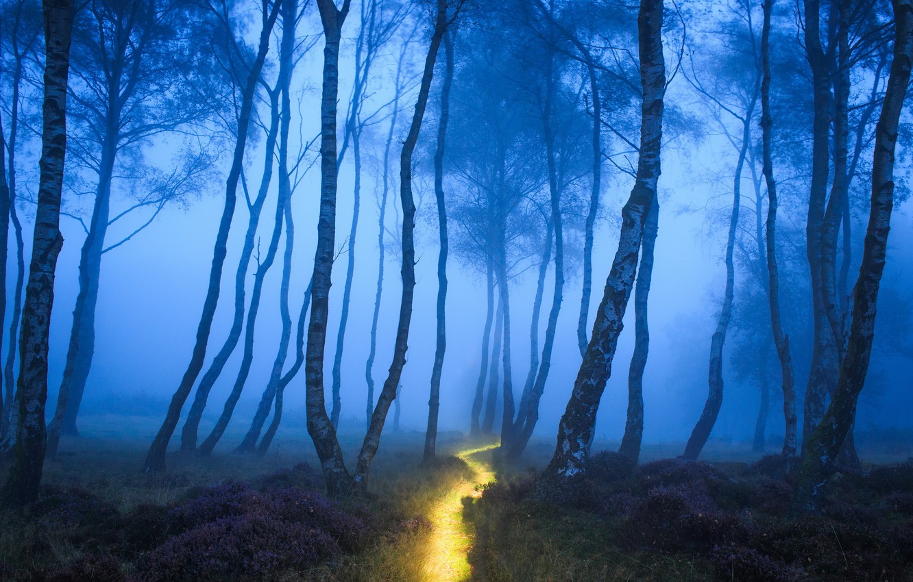 Photo wallpaper forest, nature, fog, track