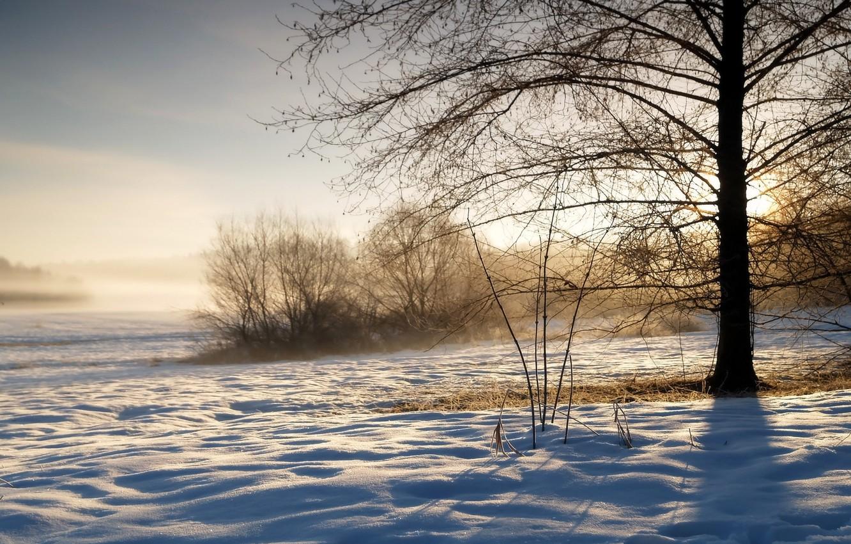 Photo wallpaper winter, the sky, grass, the sun, snow, sunrise, tree, morning, frost, couples, shadows, haze, the …