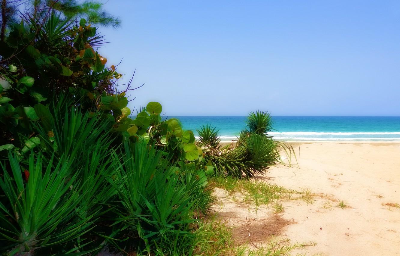 Photo wallpaper sea, Beach, sand, plants