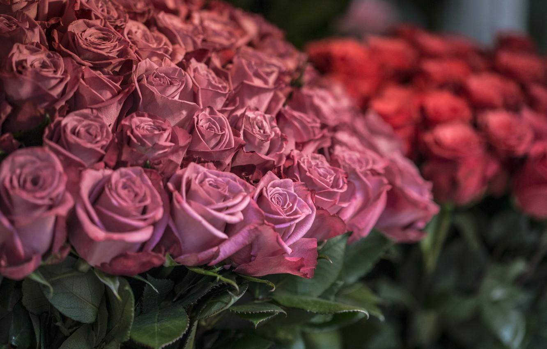 Photo wallpaper flowers, roses, petals