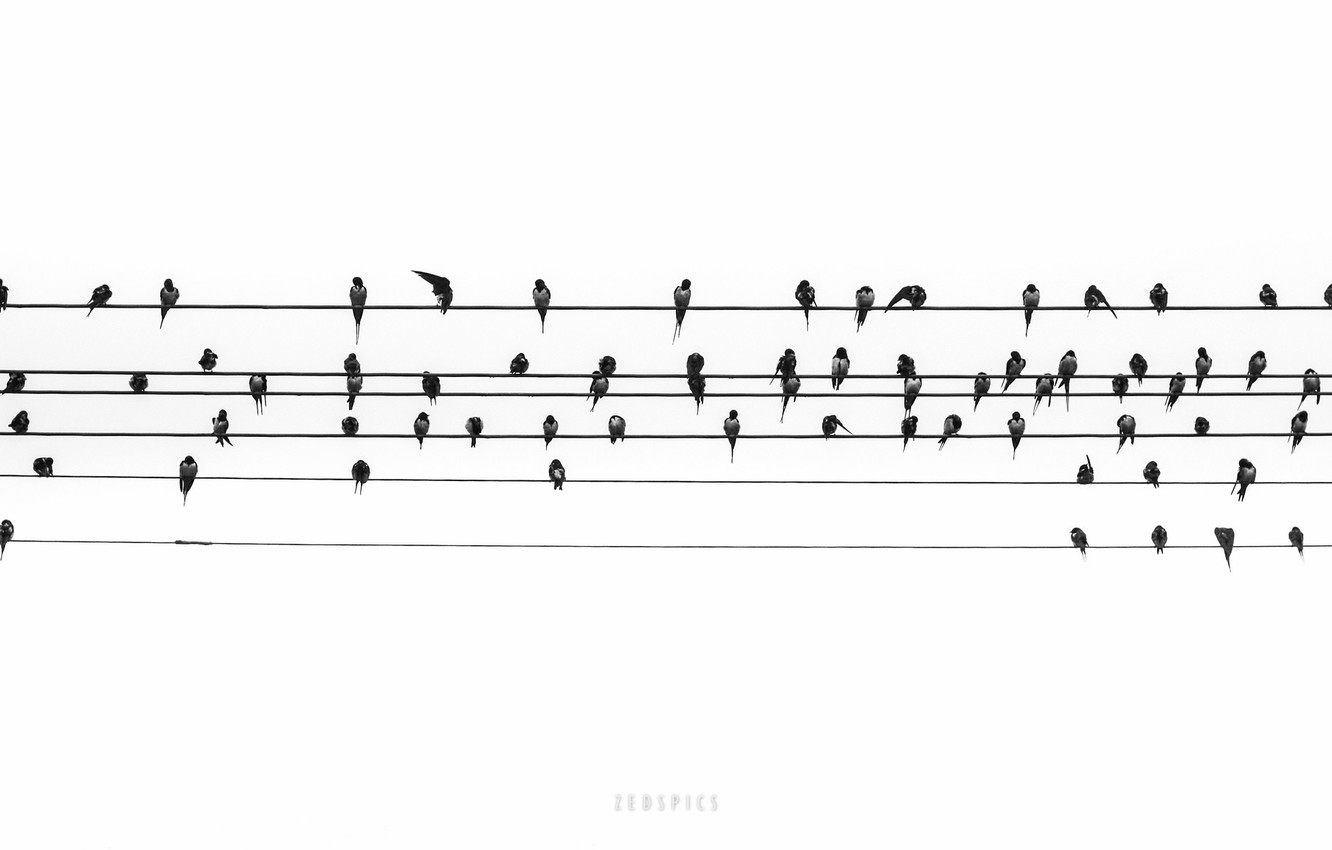 Wallpaper Birds Notes Music Wire Images For Desktop Section