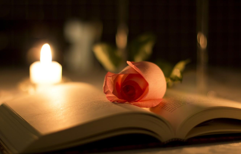 Photo wallpaper flower, macro, light, glare, rose, candle, blur, petals, book