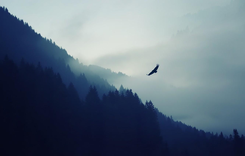 Photo wallpaper forest, mountains, nature, bird, eagle, haze