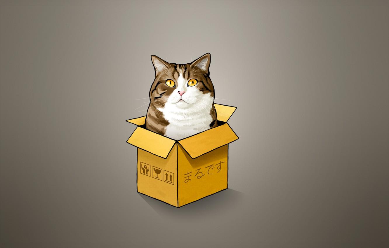 Photo wallpaper cat, cat, box, minimalism, cat, Peeps