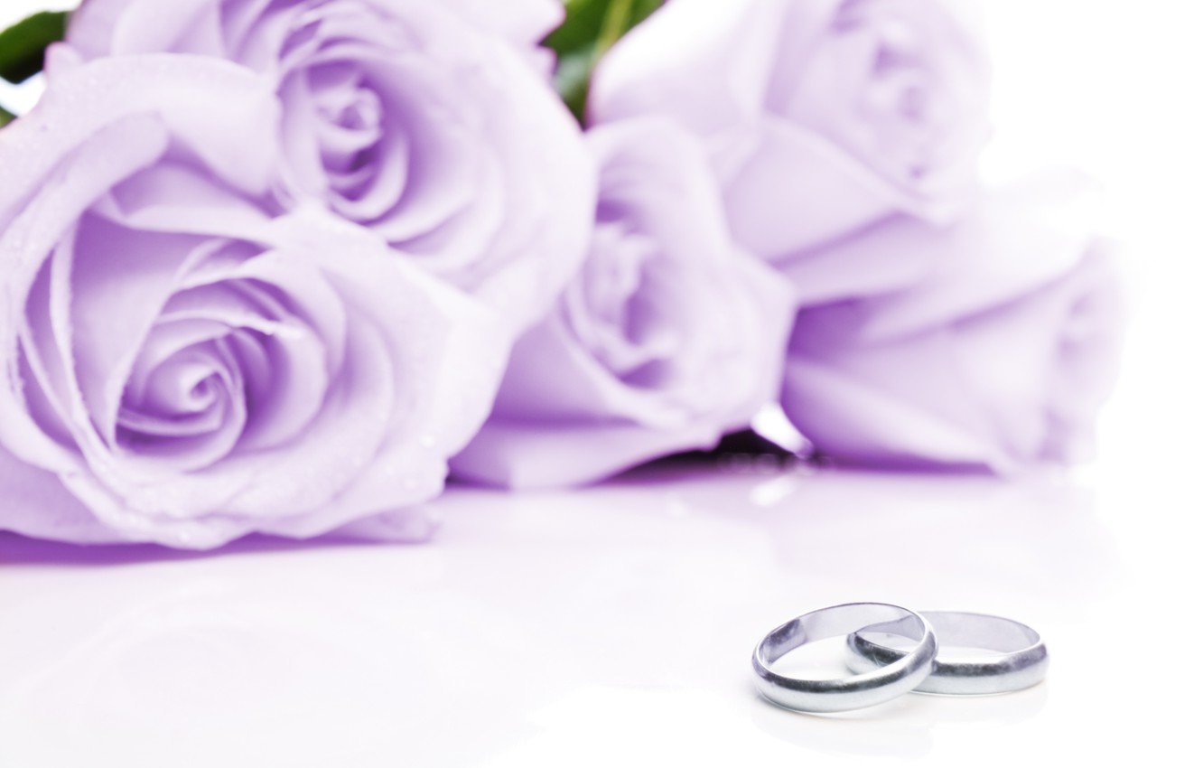 Photo wallpaper flowers, fabric, flowers, engagement rings, cloth, wedding rings, lilac roses, lilac roses