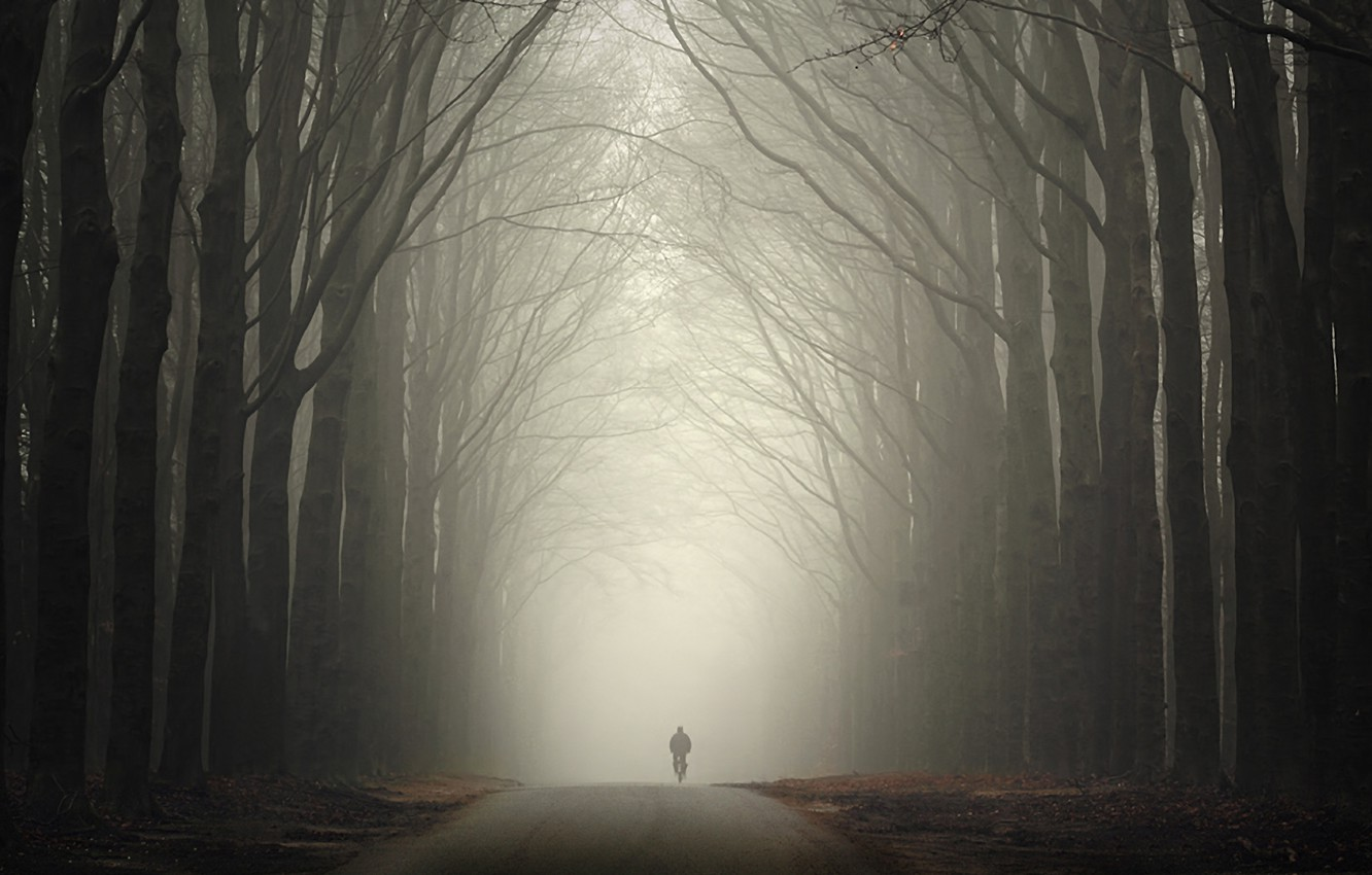 Photo wallpaper road, autumn, forest, fog, people