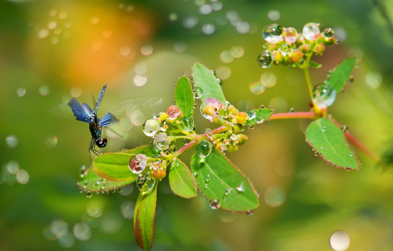 Photo wallpaper leaves, drops, Rosa, glare, plant, branch, dragonfly, fruit