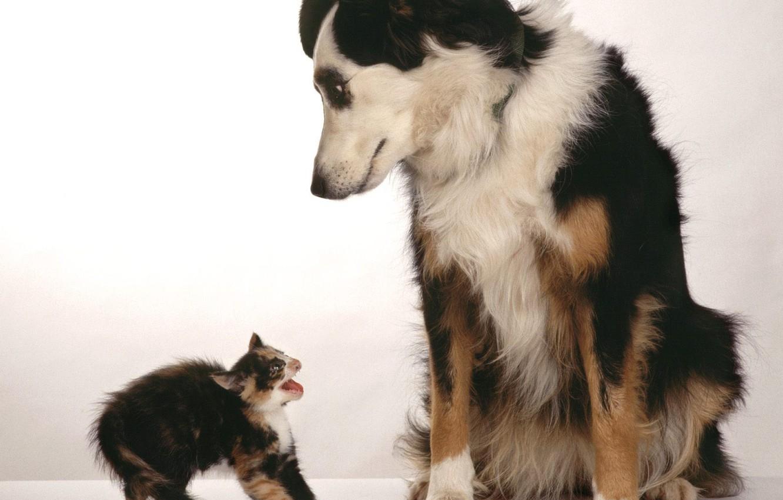 Photo wallpaper kitty, fright, Dog