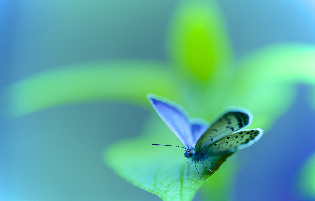 Photo wallpaper nature, sheet, butterfly, insect, moth