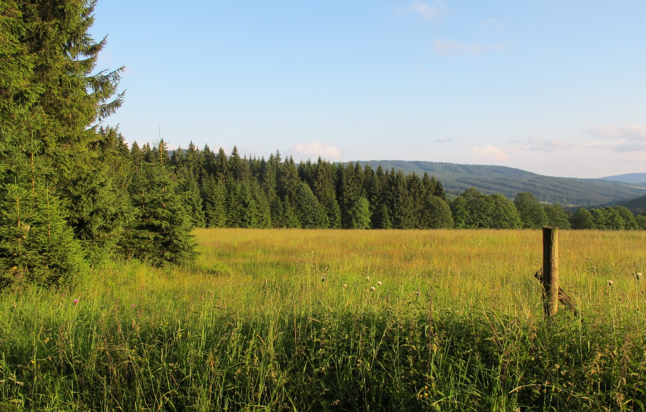 Photo wallpaper field, forest, mountains, Czech Republic, Sumava, Sumava national Park