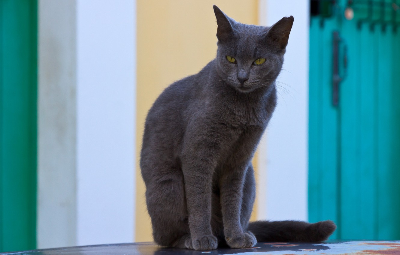 Photo wallpaper cat, background, animal