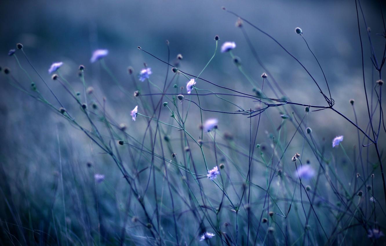 Photo wallpaper grass, flowers, blue, nature, stems, color, plants, the evening