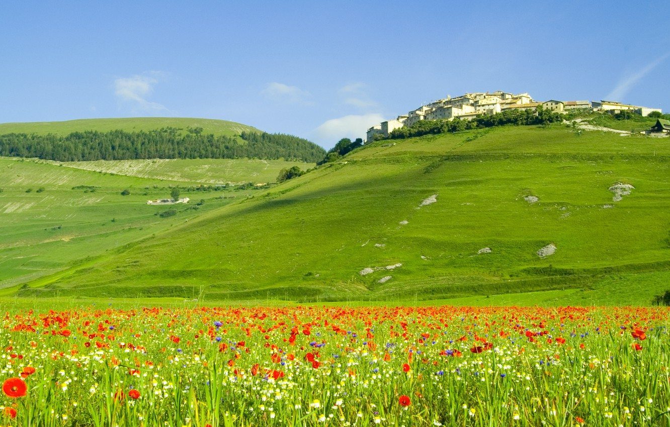 Photo wallpaper landscape, flowers, nature, hills, field, Maki, home, italia, forest, Italy