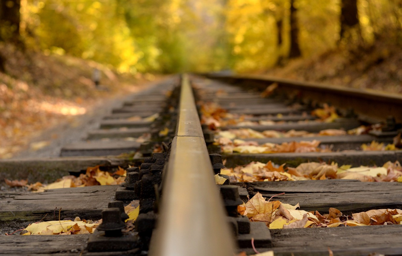 Photo wallpaper road, autumn, forest, leaves, macro, nature, rails, yellow, brown