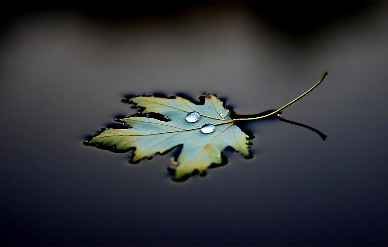 Photo wallpaper water, sheet, black, drop