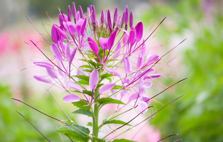 Photo wallpaper flower, plant, petals, stem, inflorescence
