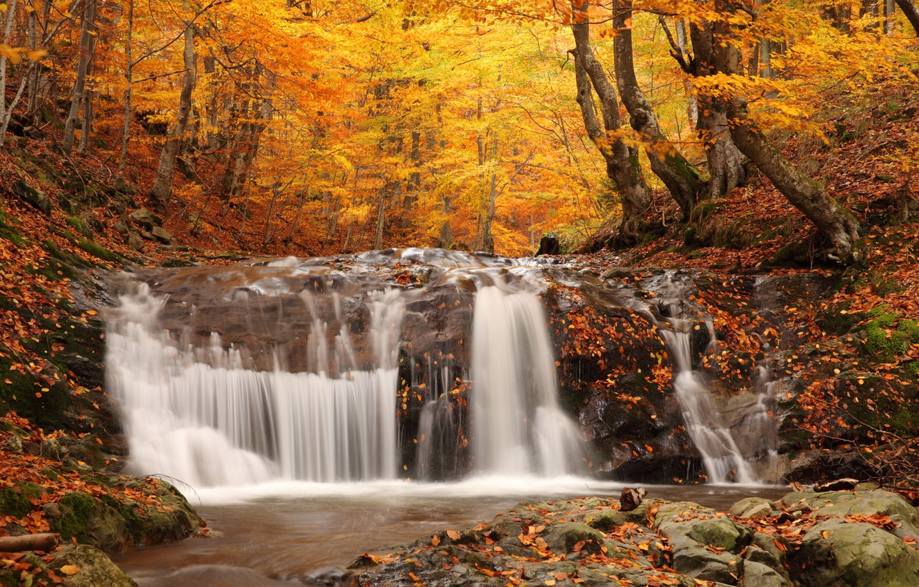 Photo wallpaper autumn, forest, trees, nature, foliage, waterfall, nature, picture, falling, Autumn waterfall, coloured wood, woodland scenery